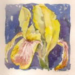 Iris  2000 - indrammet 35 x35